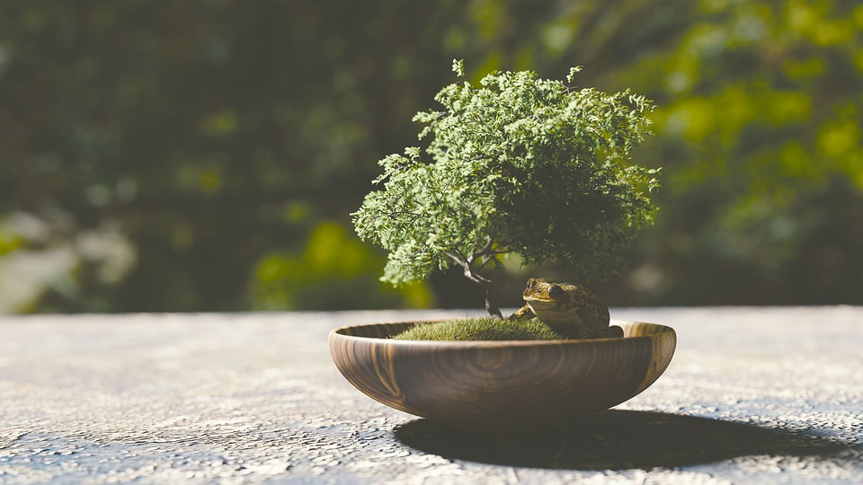 vista de un bonsai de frente